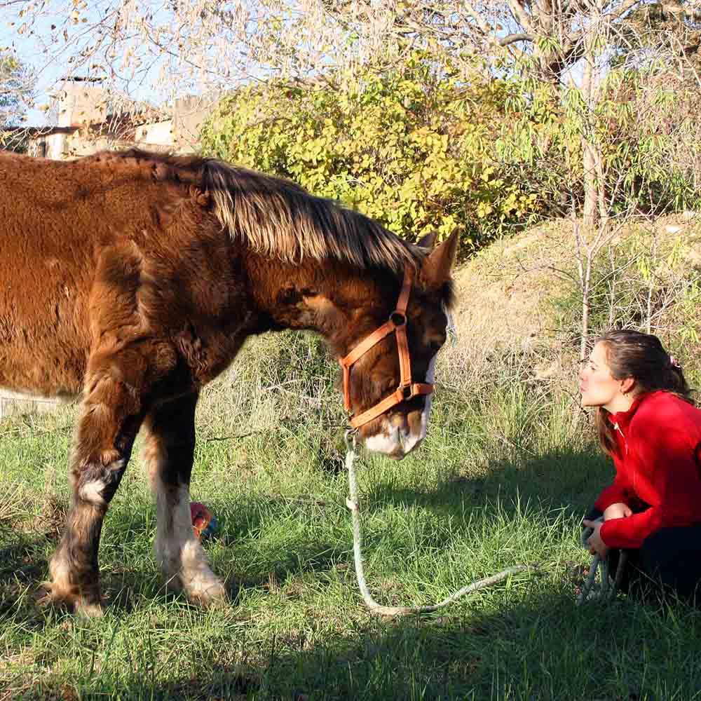 caballo pelo largo